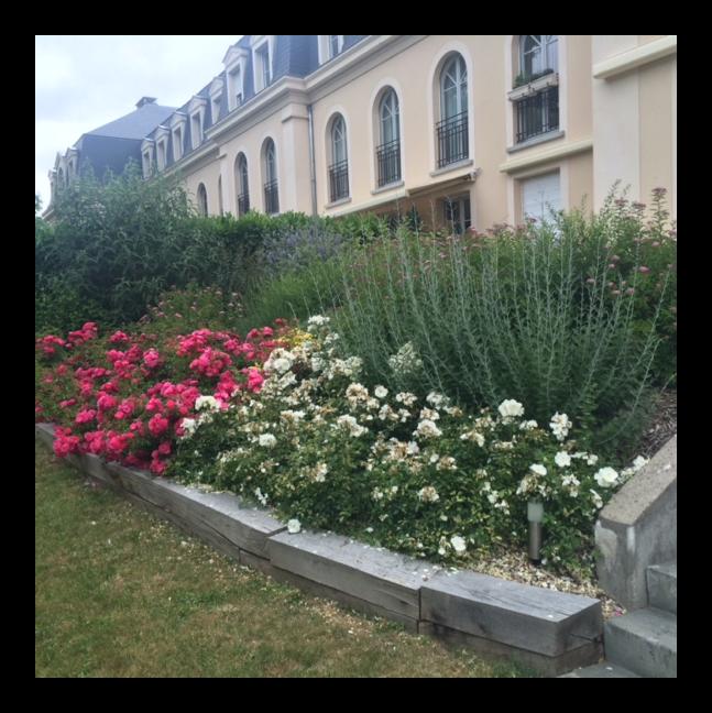 PLANTATION CONCEPT DU PAYSAGE